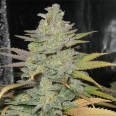 AK-47 Feminised (Import)