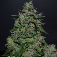 AK Kush Express Feminised (KS)